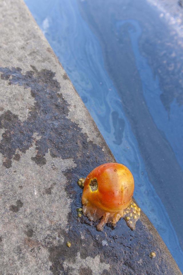 Packman goes Tomato. Havana, Cuba 2006